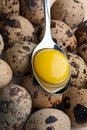 Free Egg Yolk In Spoon Royalty Free Stock Image - 17325836
