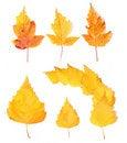 Free Yellow Autumn Leaves Stock Image - 17327711