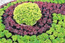 Beautiful Garden Stock Image