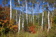 Free Rocky Mountain Fall Stock Photo - 17321190