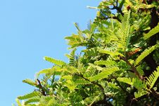 Free Green Leaf And Blue Sky Royalty Free Stock Images - 17321359