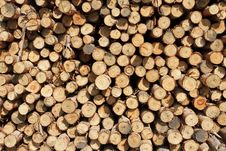 Free Cross Section Of Wood Background Stock Photo - 17321490