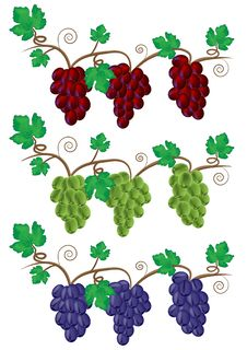 Free Grape And Vine Illustration Royalty Free Stock Image - 17322816