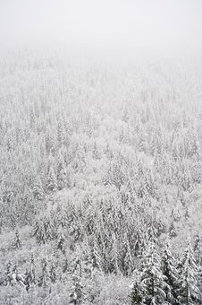 Free Winter Forest Stock Photos - 17323923