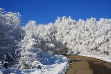 Free The Road To Dream-world Of Snow Forest Stock Photos - 17326233