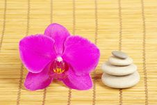 Orchid And Stones Stock Photography