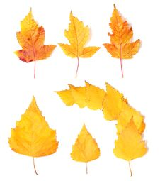 Free Yellow Autumn Leaves Stock Image - 17327711