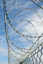 Free Barbed Wire Stock Photo - 17335310