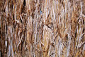 Free Dry Grass Stock Image - 17336811