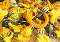 Free Gourds Royalty Free Stock Photo - 17337735