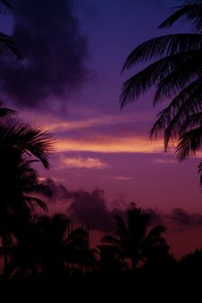 Palmtrees  Silhouette On Sunrise In Tropic Stock Photography