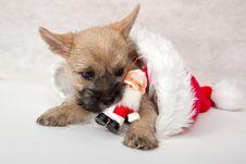 Free Christmas Present Stock Photo - 17334750