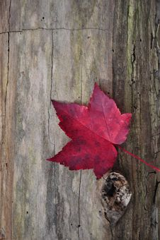 Free Lone Leaf On A Log Stock Images - 17335914