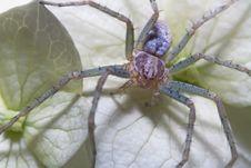 Free Spider Stock Photo - 17336400