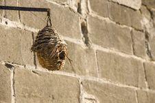 Free Bird Feeder Stock Photos - 17338233