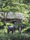 Free Elephants In Nature Stock Photography - 17345252