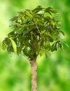 Free Plant Stock Photos - 17347313