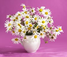 Bouquet Of Flowers Camomile Royalty Free Stock Image