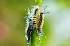 Free Caterpillar Stock Photos - 17342973