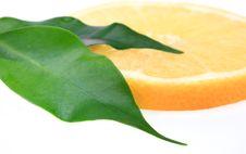 Free Lemon Royalty Free Stock Photos - 17344268