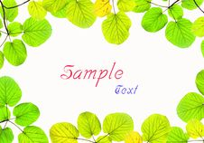 Free Green Leave Frame Isolated On White Background Royalty Free Stock Photos - 17345418