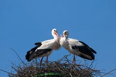 Free White Storks Pair On Nest Royalty Free Stock Images - 17345959