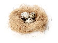 Free Quail Eggs Stock Images - 17348074