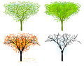 Free Tree In For Season Stock Images - 17351474