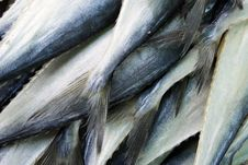 Fish Tails Royalty Free Stock Images