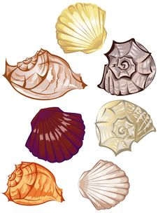 Free Multi-colored Seashells Royalty Free Stock Photography - 17350667