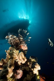Lionfish And Ocean. Stock Images