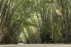 Free Way Of Bamboo Stock Images - 17351784
