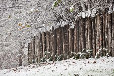 Free Heavy Snowfall Royalty Free Stock Image - 17352146