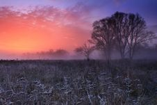 Free Frosty Morning Stock Image - 17352481