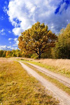 Road Through Autumn Wood Royalty Free Stock Photos