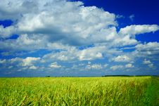 Free Field Of Wheat And Sky Stock Photos - 17353253