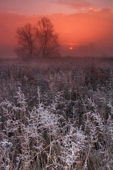 Free Frosty Morning Royalty Free Stock Photos - 17353978