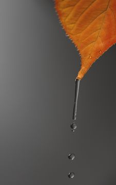 Water Drop On The Verge Of Falling Dow Stock Photography