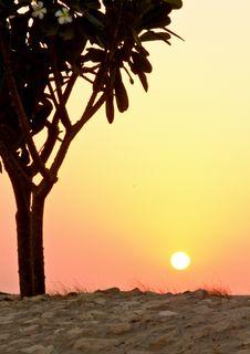 Free Frangipani Fowers Tree On Sunset Stock Image - 17355481