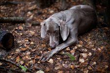 Free Dog2 Stock Photo - 17356210
