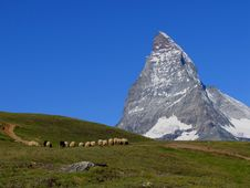 Free Swiss Beauty, Sheeps Under Majesty Matterhorn Stock Photography - 17357162