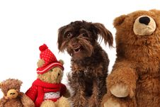 Adorable Dog Among The Christmas Bears Stock Image