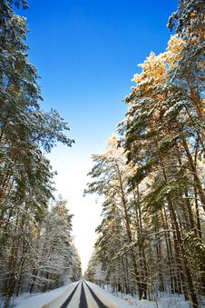 Road In The Winter Forest Stock Image