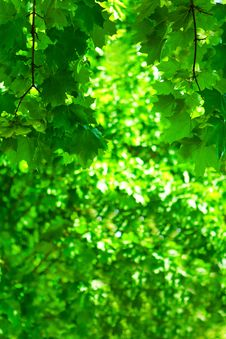 Free Green Foliage Royalty Free Stock Photos - 17358268