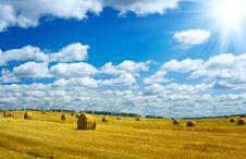 Harvesting Field Royalty Free Stock Image