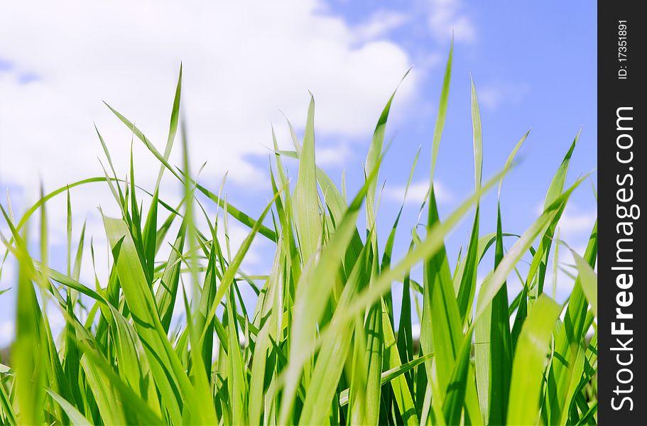 Green grass field under midday sun in blue sky.
