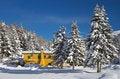 Free Dew Under Snow Stock Photos - 17365423