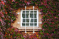 Free Window In A Wall Perfectly Covered By Boston Ivy Royalty Free Stock Photos - 17369968