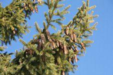Free Tree Stock Photo - 17360790