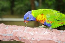 Free Parrot Royalty Free Stock Image - 17362126